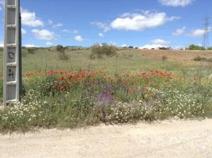 Spring flowers near Madrid